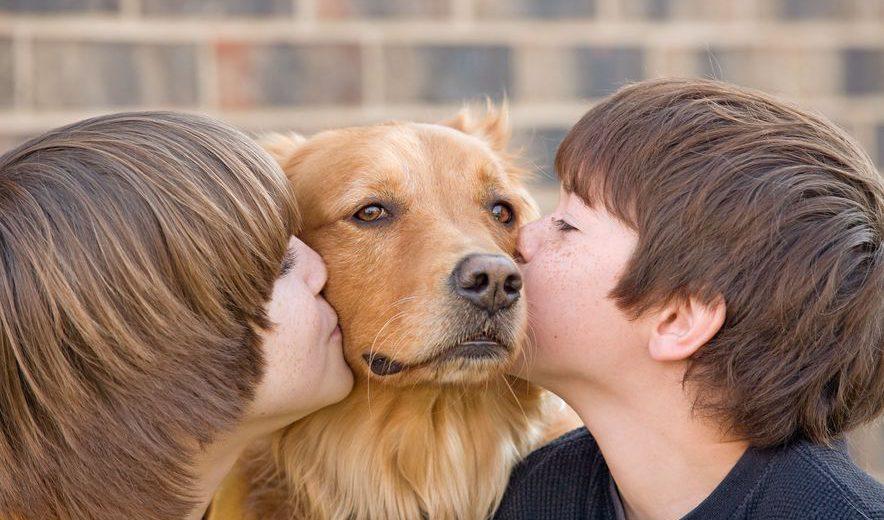 אילוף כלבים מבית 'דיאלדוג'